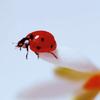 Ladybird on the edge