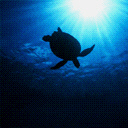 Turtle Sillouhette 2