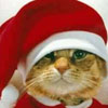 Xmas Cat