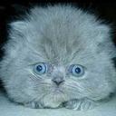 cat avatar 0326