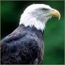 exotic animal avatar 1732